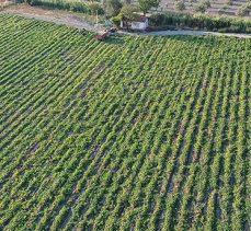 Tarım ve Orman Bakanlığı bireysel sulama sistemi yatırımlarına destek verecek